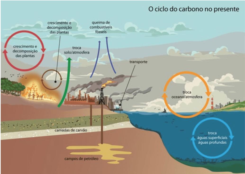 Ciclo de Carbono na Natureza