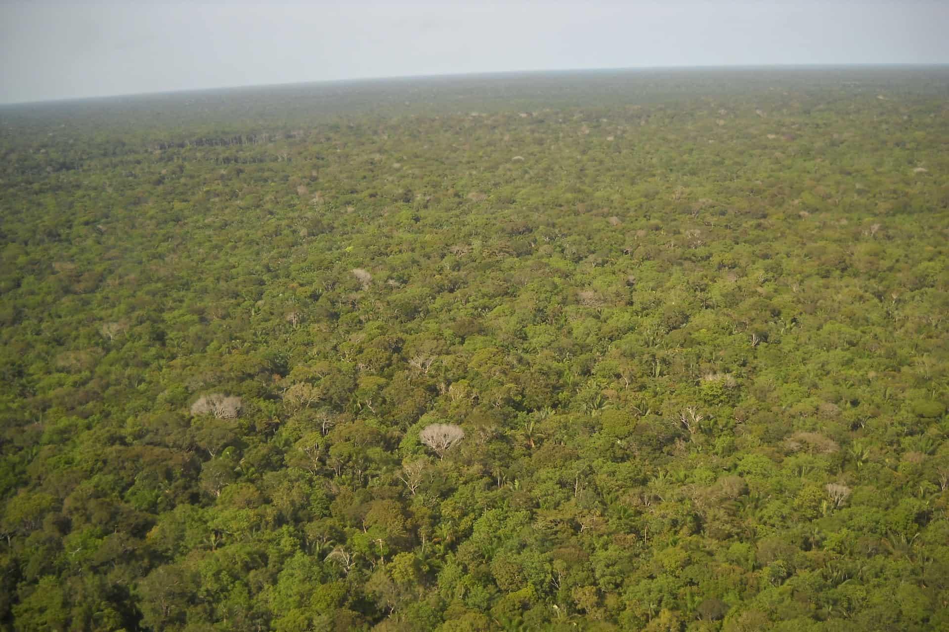 Floresta Amazônica - Sequestro de Carbono